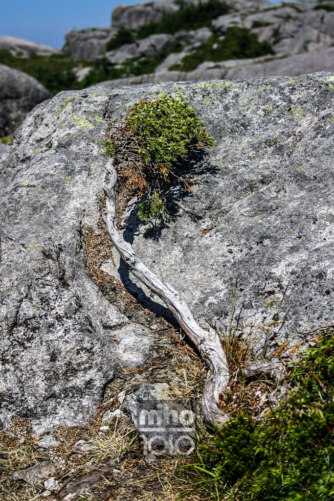 Steine und Moos | Stone and Moss