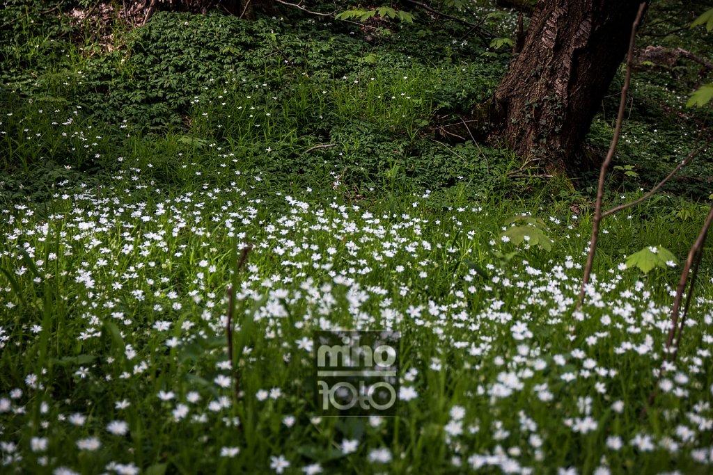 der Wald blüht   Blossomed Forest