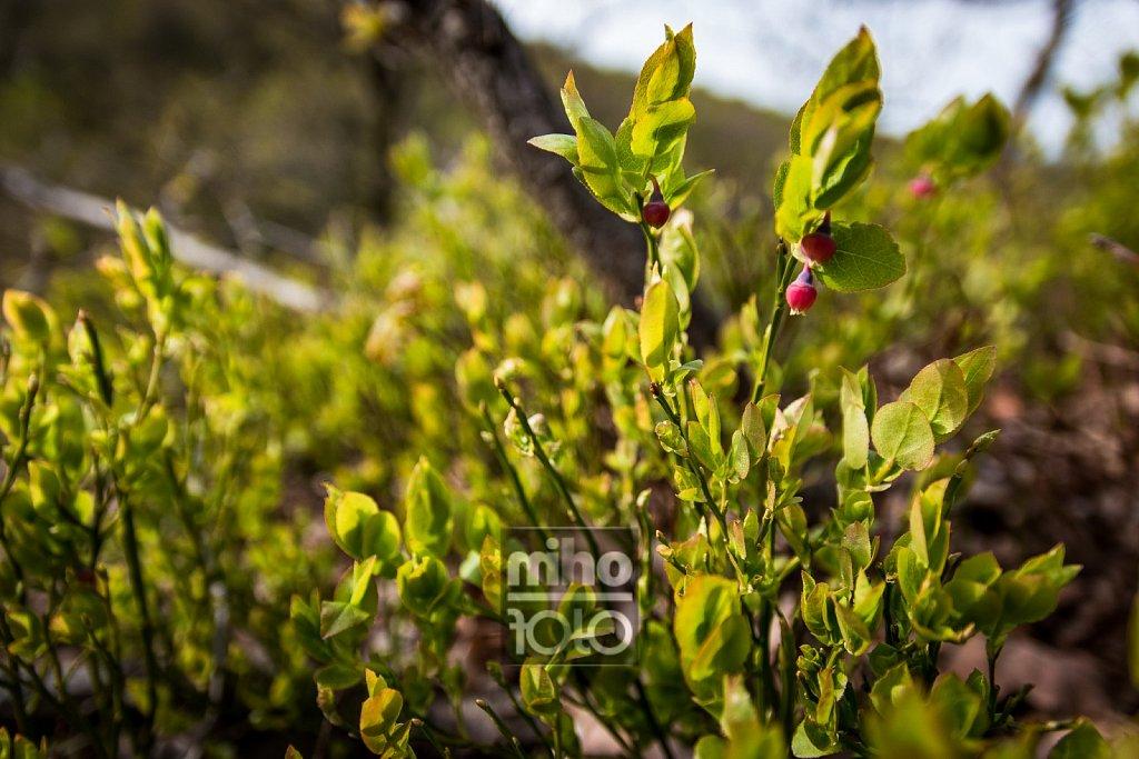 Beeren   Berries