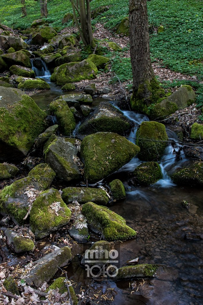 am Sparbach | Sparbach creek