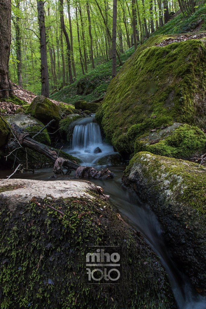 am Sparbach [2] | Sparbach creek [2]