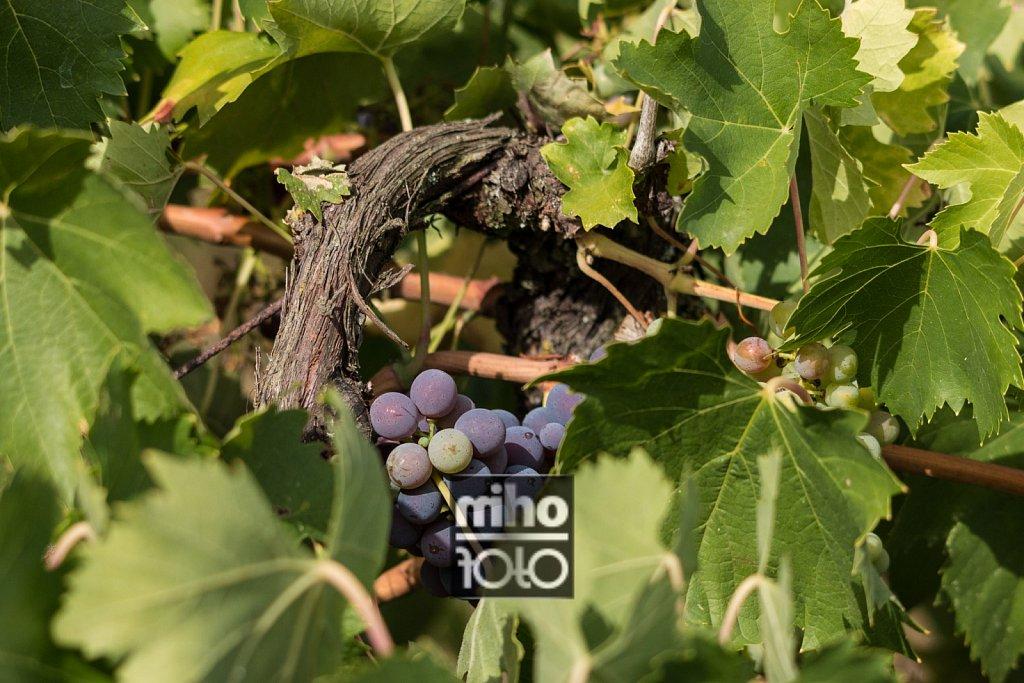 Wein | Wine