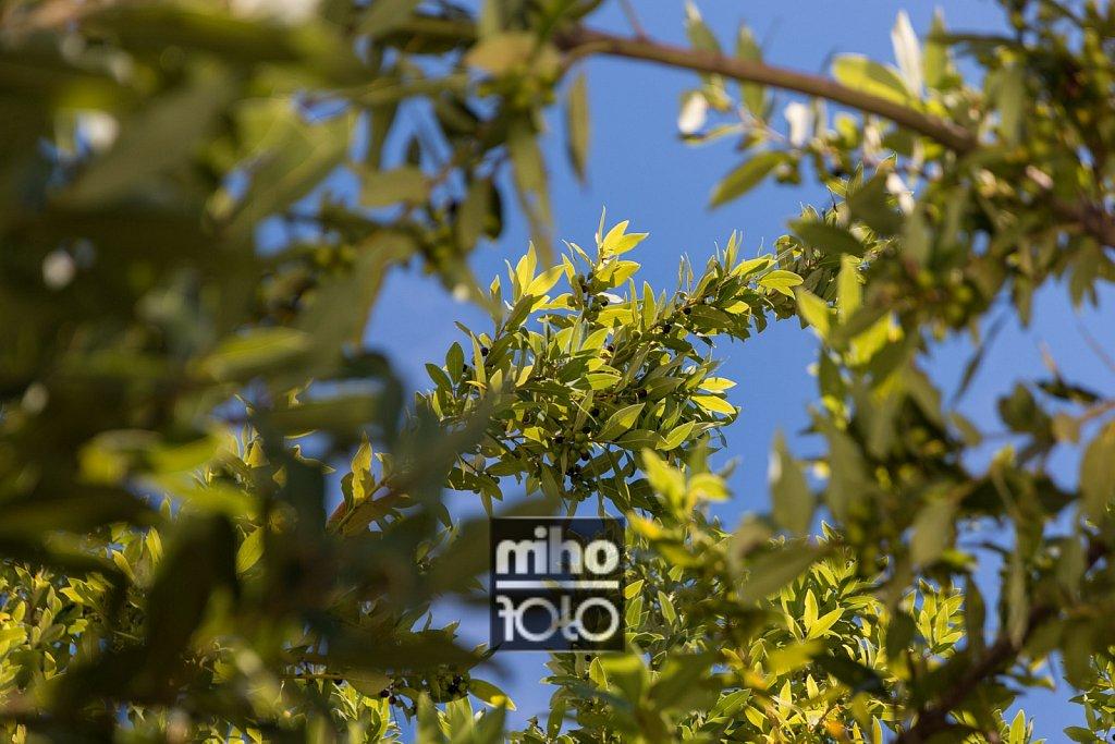 Oliven | Olives